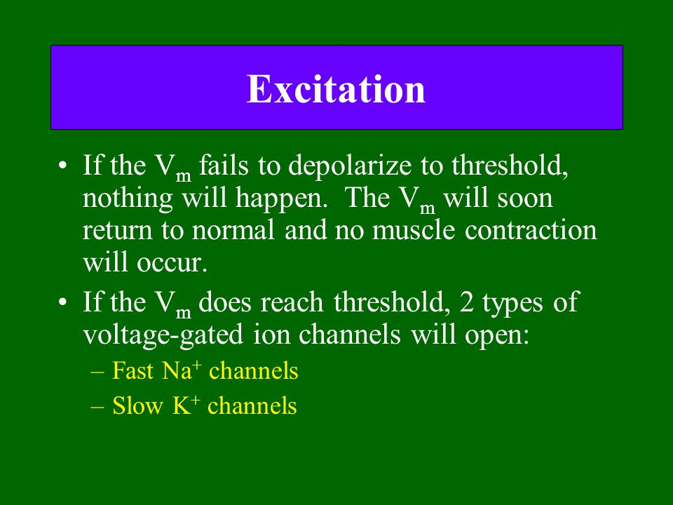 Excitation If the Vm fails to depolarize to threshold, nothing will happen. The Vm will soon return to normal and no muscle contraction will occur.