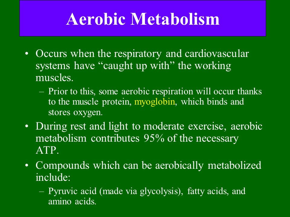Aerobic Metabolism Occurs when the respiratory and cardiovascular systems have caught up with the working muscles.