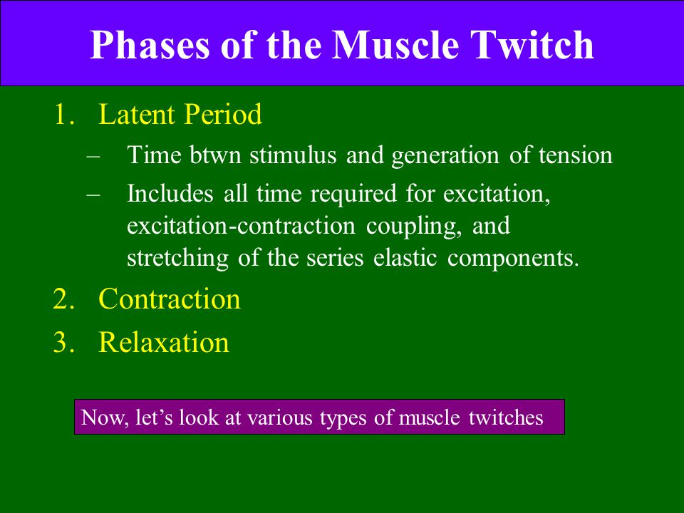 Phases of the Muscle Twitch