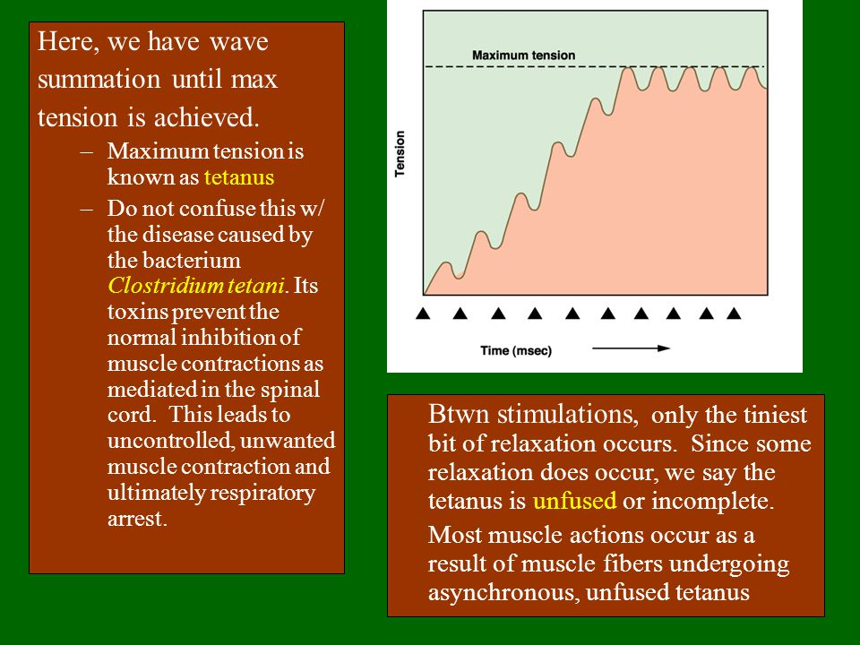Here, we have wave summation until max tension is achieved.