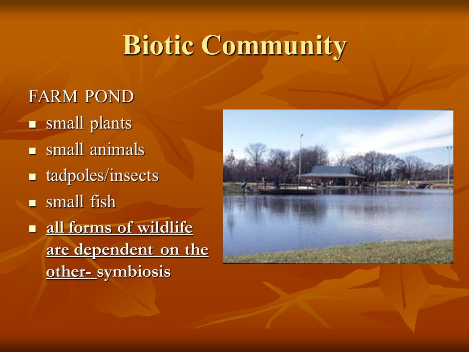 Biotic Community FARM POND small plants small animals tadpoles/insects