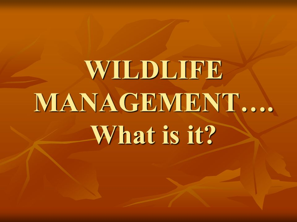 WILDLIFE MANAGEMENT…. What is it