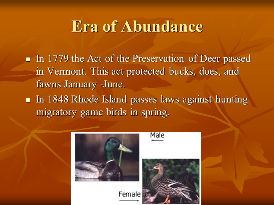Era of Abundance In 1779 the Act of the Preservation of Deer passed in Vermont. This act protected bucks, does, and fawns January -June.