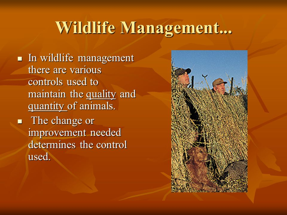 Wildlife Management... In wildlife management there are various controls used to maintain the quality and quantity of animals.