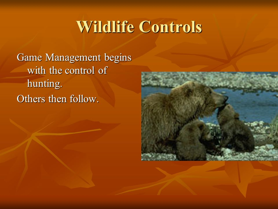 Wildlife Controls Game Management begins with the control of hunting.