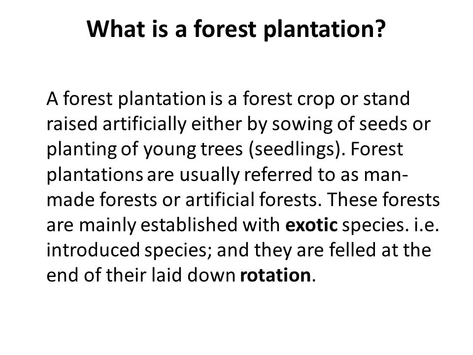 What is a forest plantation