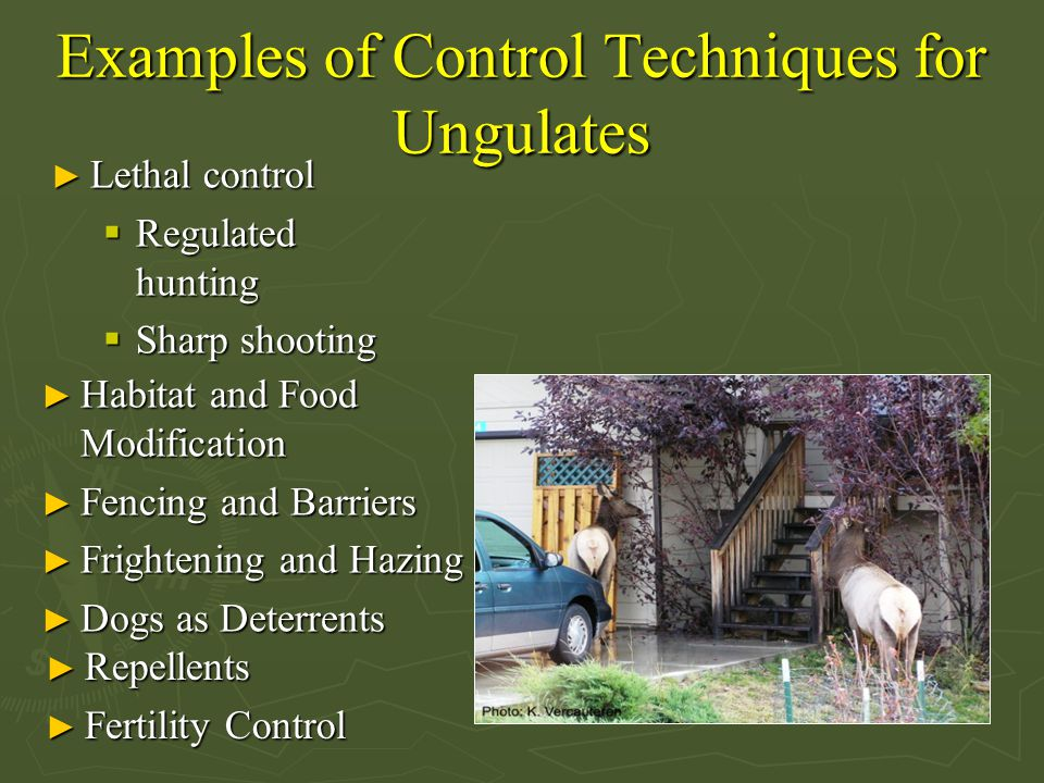 Examples of Control Techniques for Ungulates