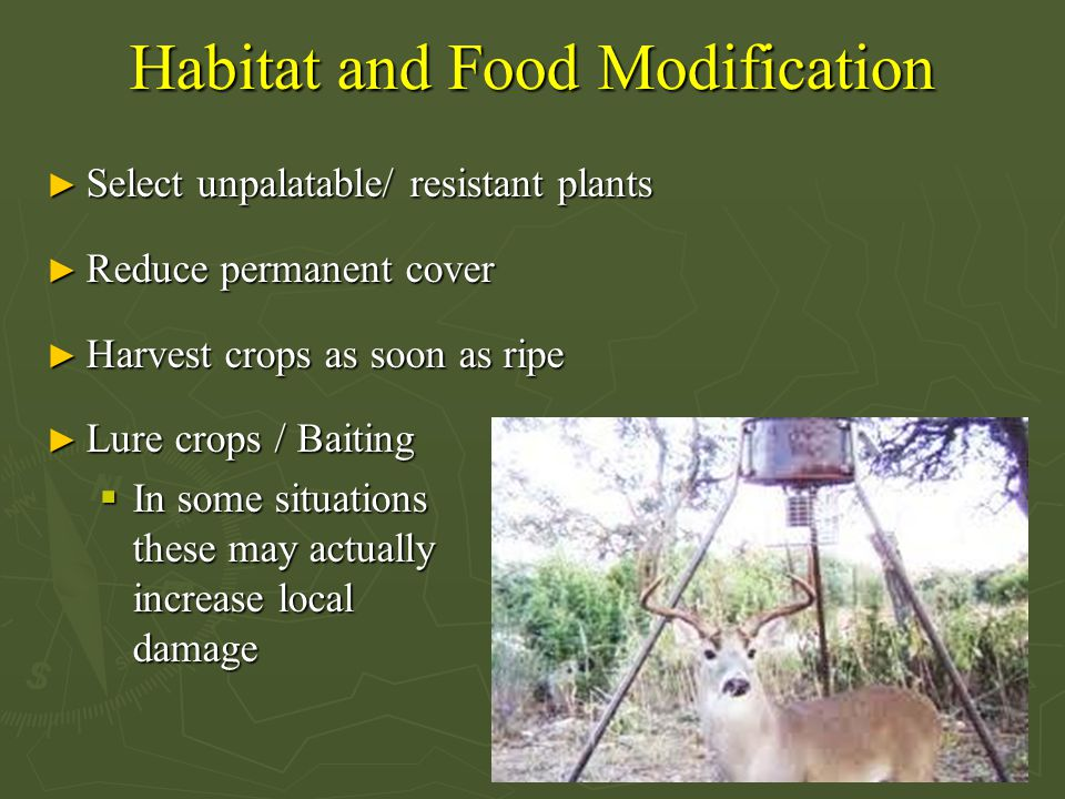 Habitat and Food Modification