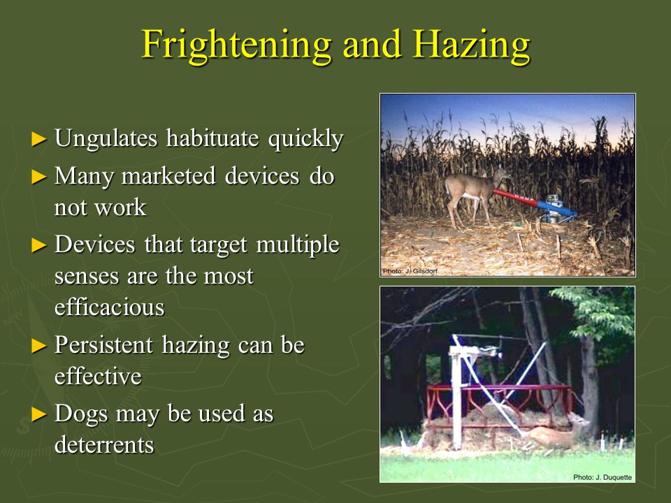 Frightening and Hazing