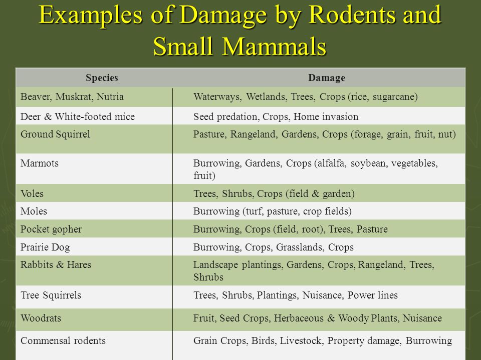 Examples of Damage by Rodents and Small Mammals