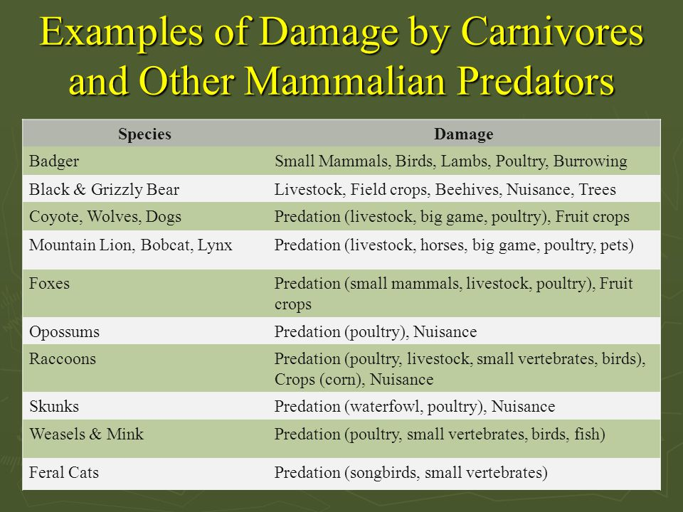 Examples of Damage by Carnivores and Other Mammalian Predators
