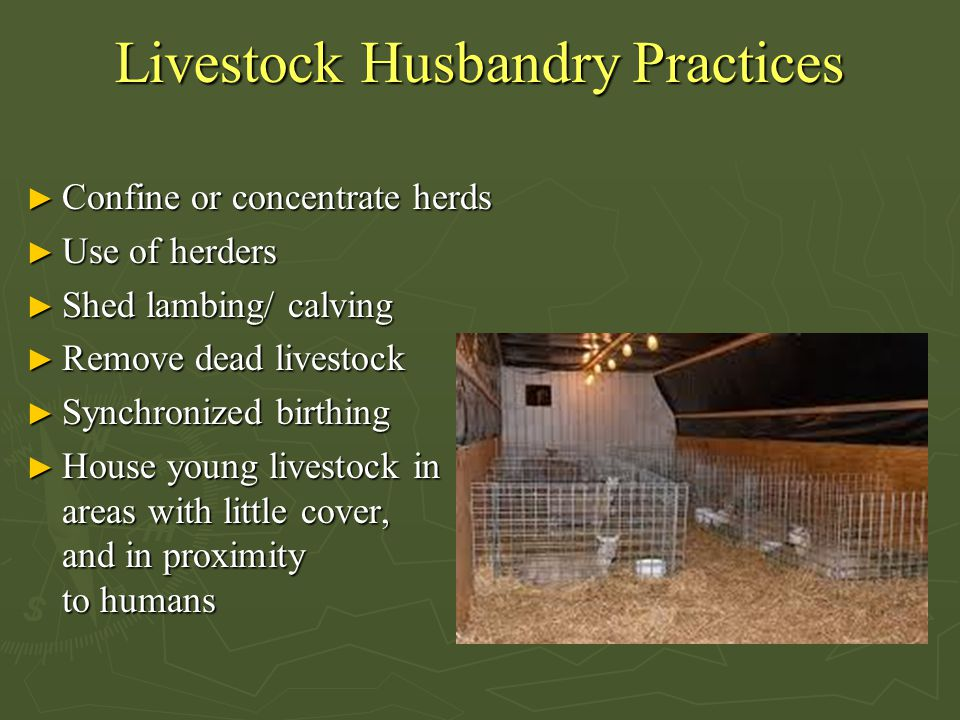 Livestock Husbandry Practices