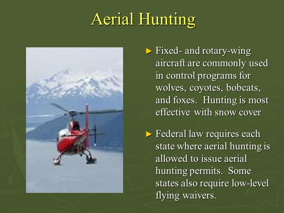 Aerial Hunting