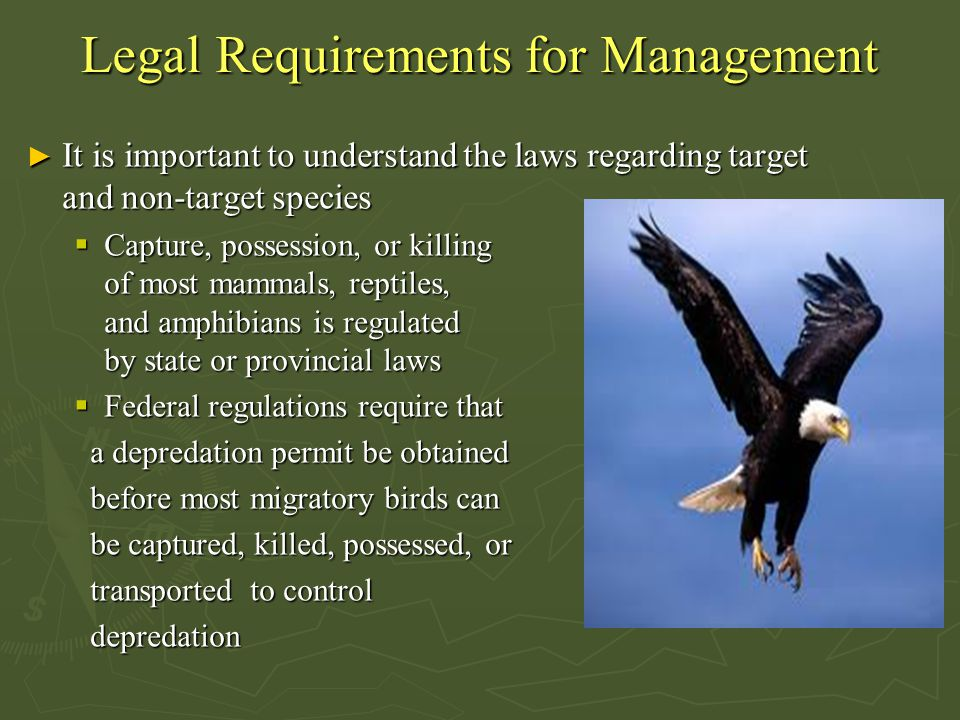 Legal Requirements for Management