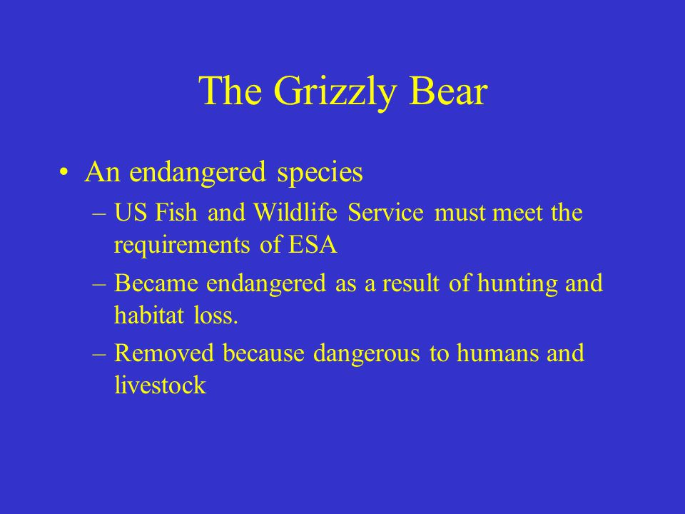 The Grizzly Bear An endangered species