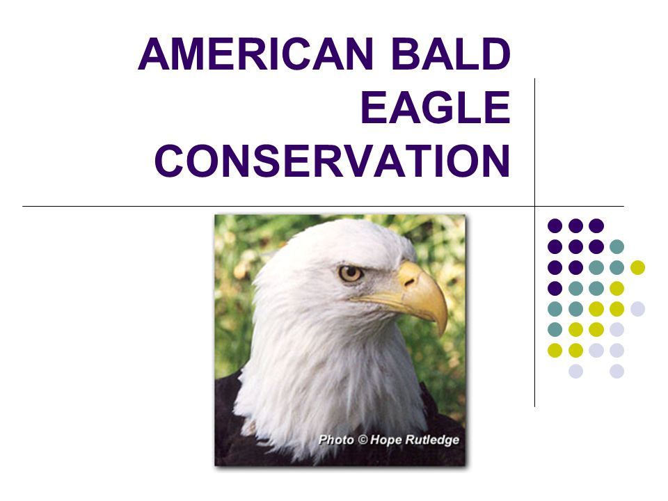 AMERICAN BALD EAGLE CONSERVATION