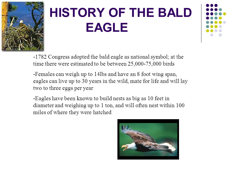 HISTORY OF THE BALD EAGLE