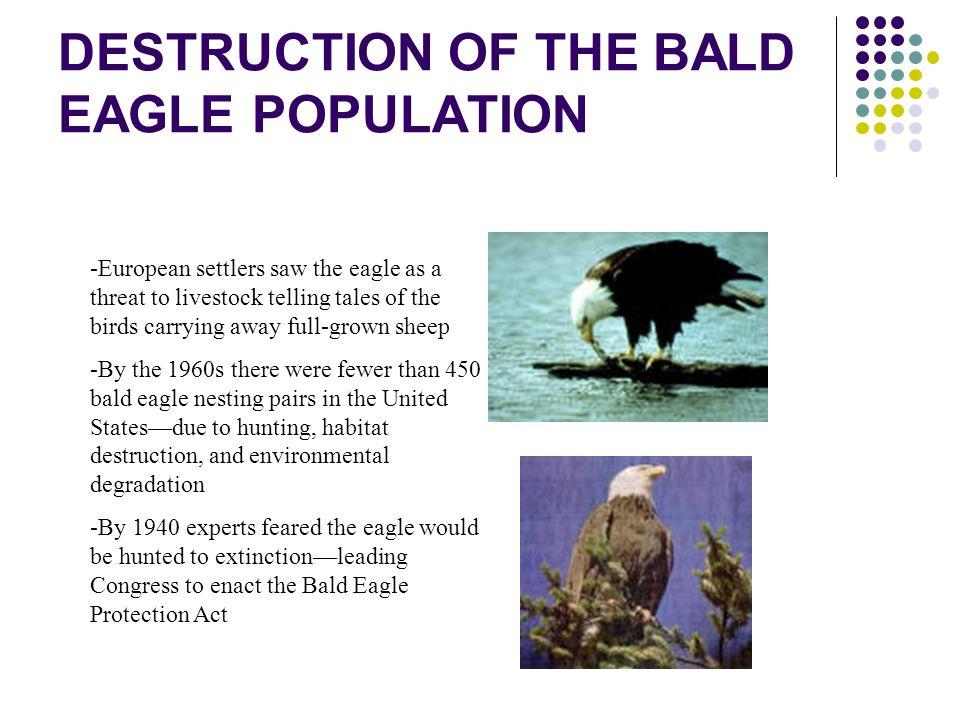 DESTRUCTION OF THE BALD EAGLE POPULATION
