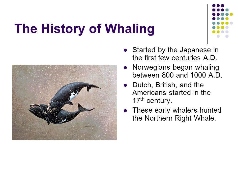 The History of Whaling Started by the Japanese in the first few centuries A.D. Norwegians began whaling between 800 and 1000 A.D.