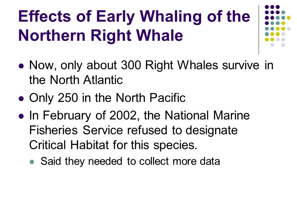 Effects of Early Whaling of the Northern Right Whale