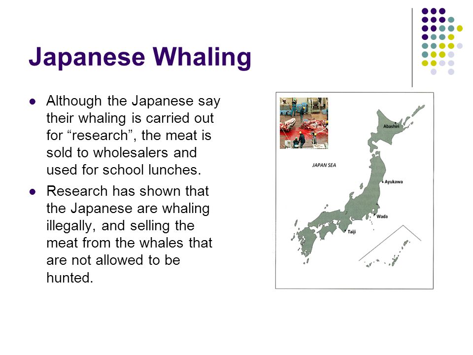Japanese Whaling Although the Japanese say their whaling is carried out for research , the meat is sold to wholesalers and used for school lunches.