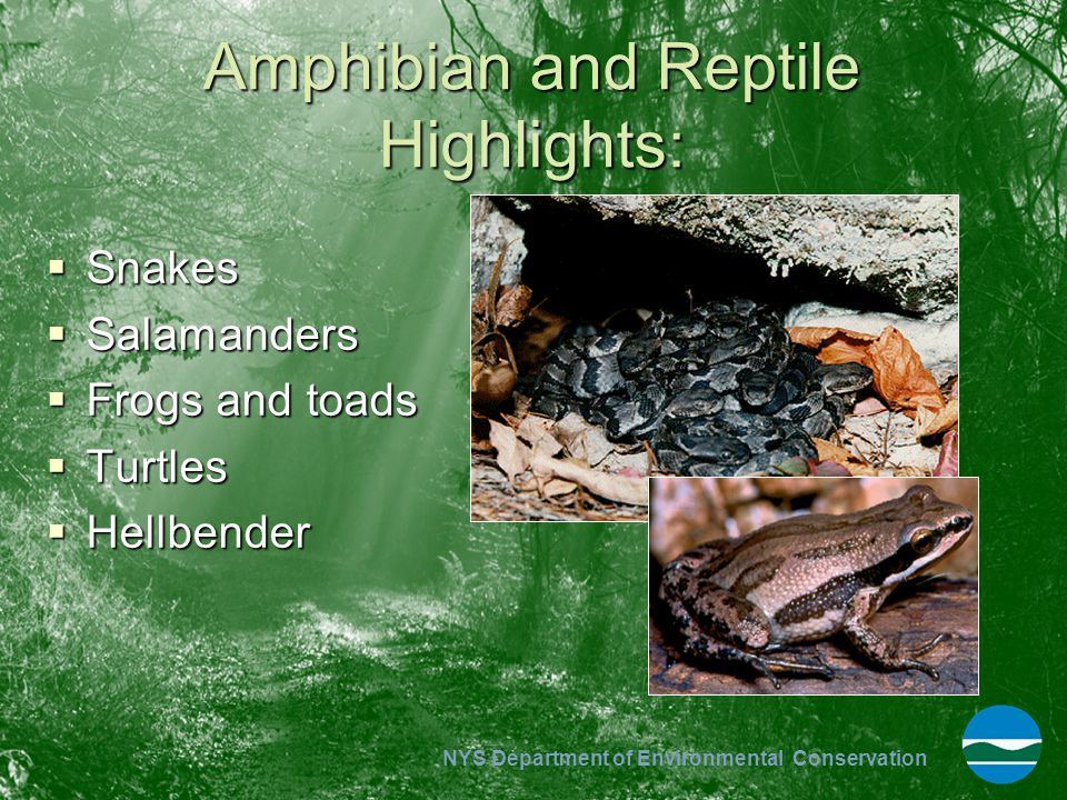 Amphibian and Reptile Highlights: