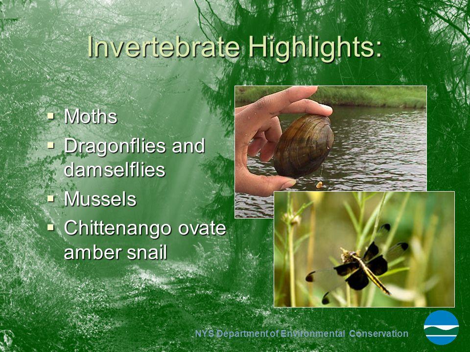 Invertebrate Highlights: