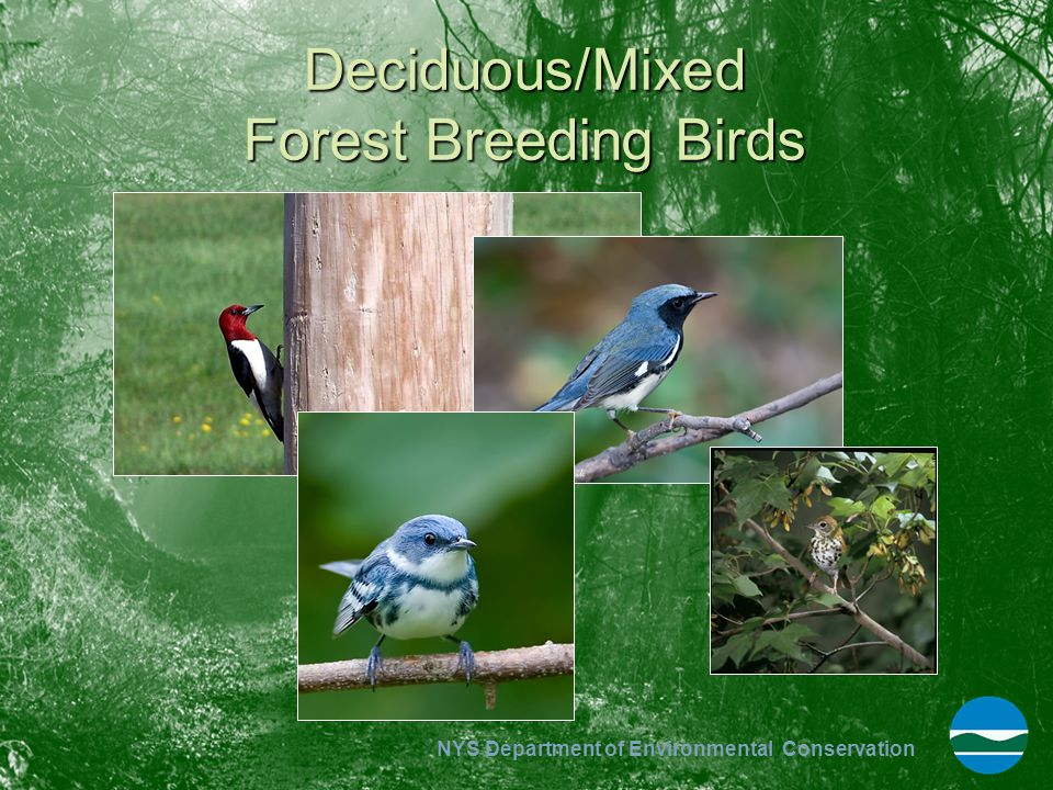 Deciduous/Mixed Forest Breeding Birds
