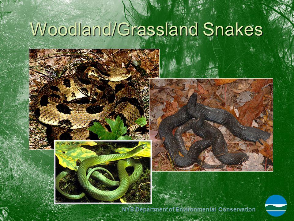 Woodland/Grassland Snakes