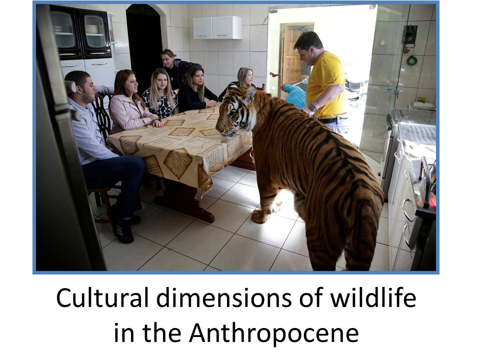 Cultural dimensions of wildlife in the Anthropocene