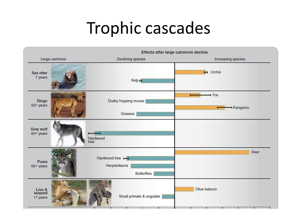 Trophic cascades National Geographic Strange Days video, start 2 minutes in