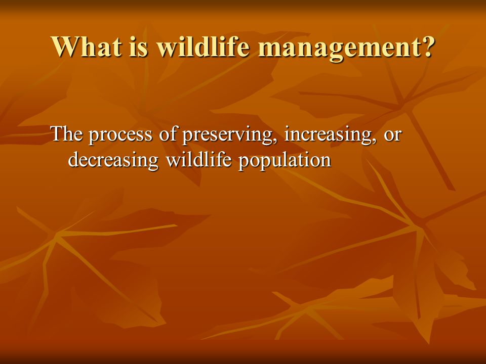 What is wildlife management