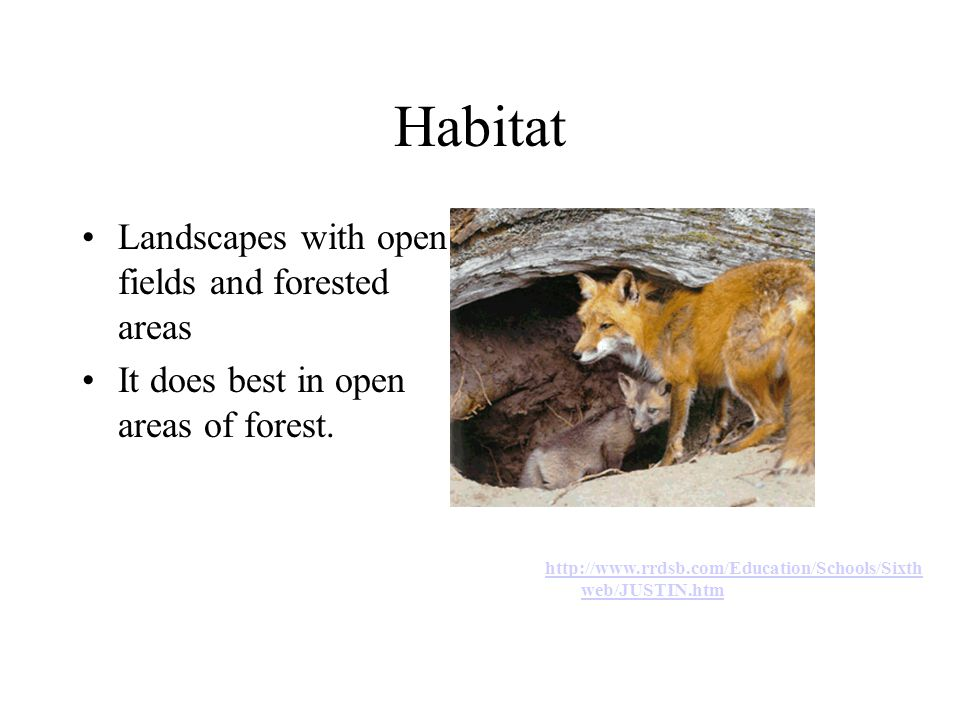 Habitat Landscapes with open fields and forested areas