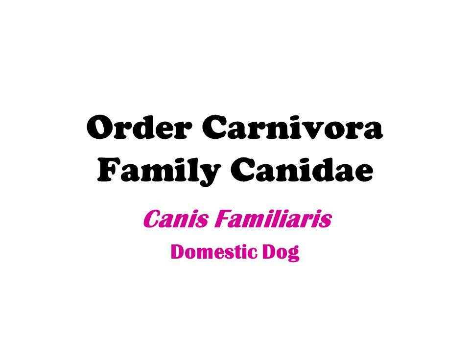 Order Carnivora Family Canidae