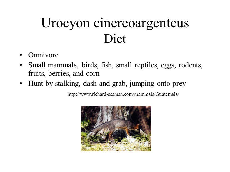 Urocyon cinereoargenteus Diet