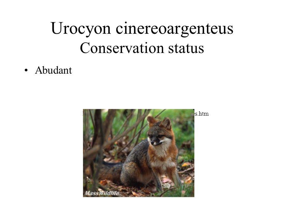 Urocyon cinereoargenteus Conservation status