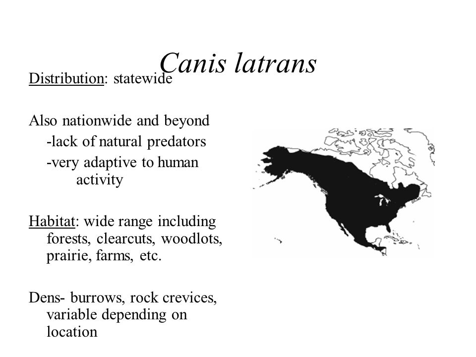 Canis latrans Distribution: statewide Also nationwide and beyond