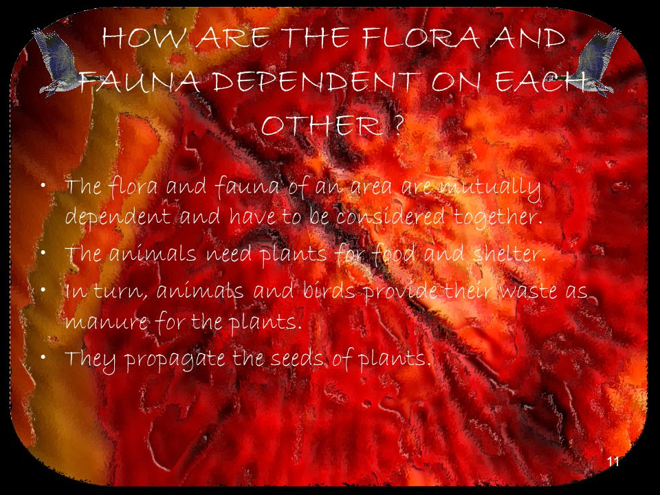 HOW ARE THE FLORA AND FAUNA DEPENDENT ON EACH OTHER