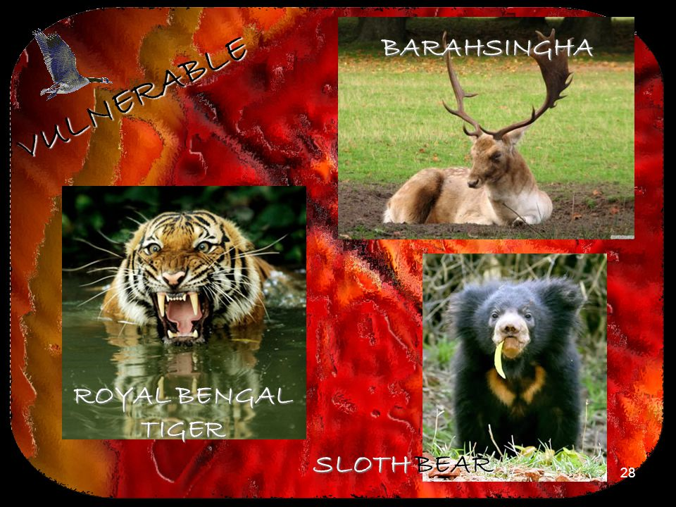 BARAHSINGHA VULNERABLE ROYAL BENGAL TIGER SLOTH BEAR