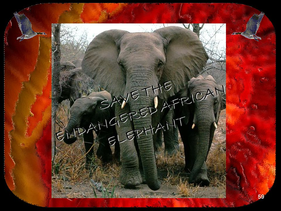 SAVE THE ENDANGERED AFRICAN ELEPHANT
