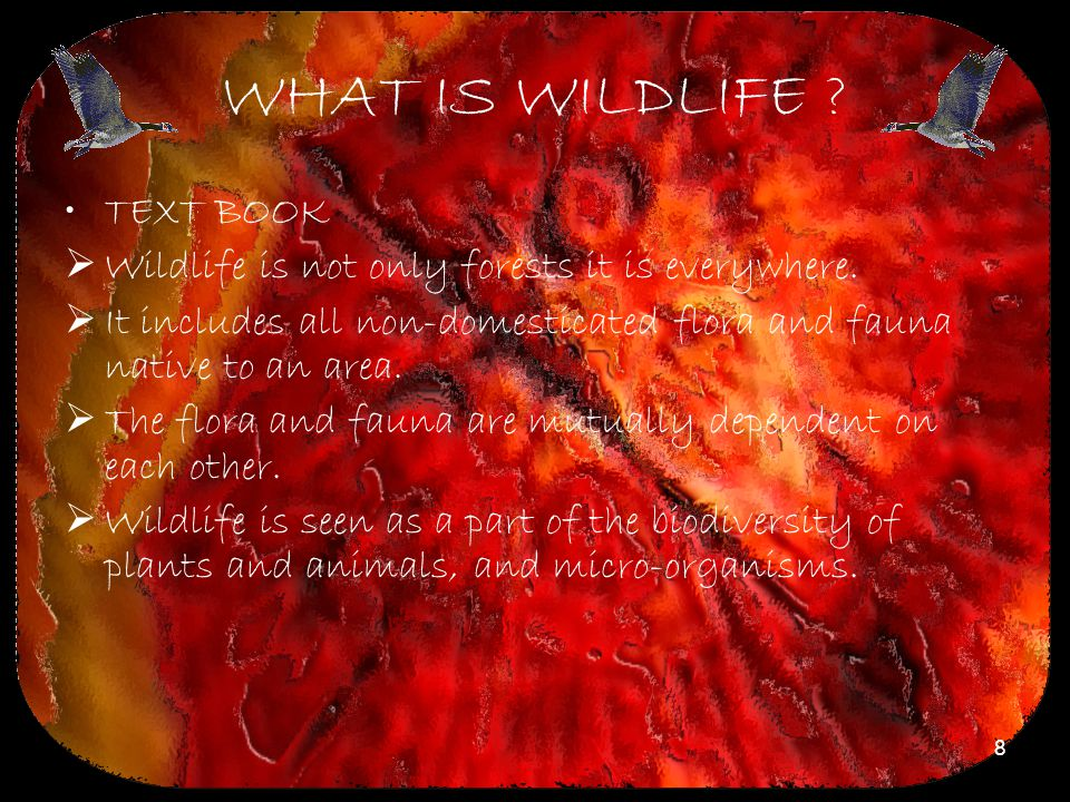 WHAT IS WILDLIFE TEXT BOOK