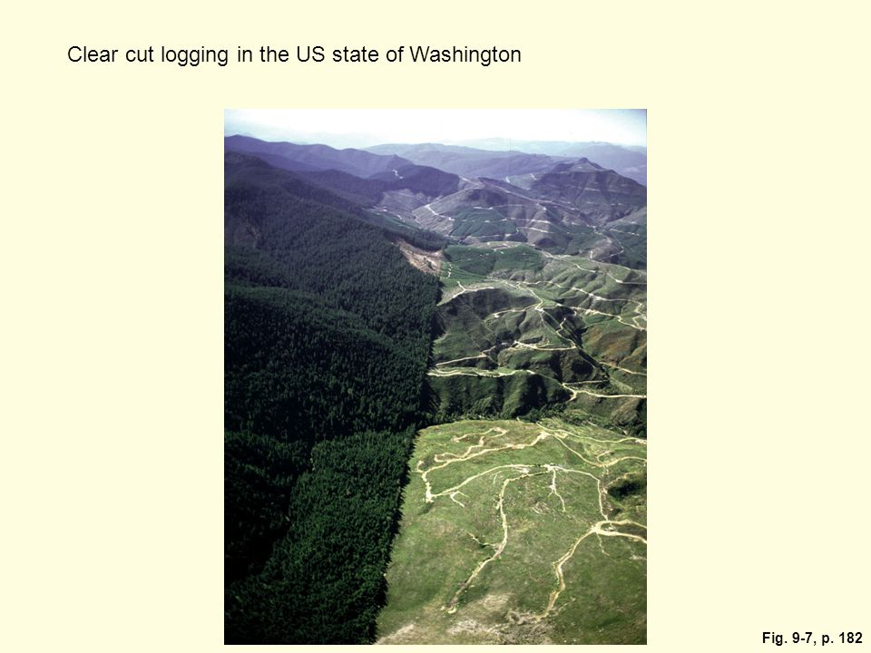 Clear cut logging in the US state of Washington