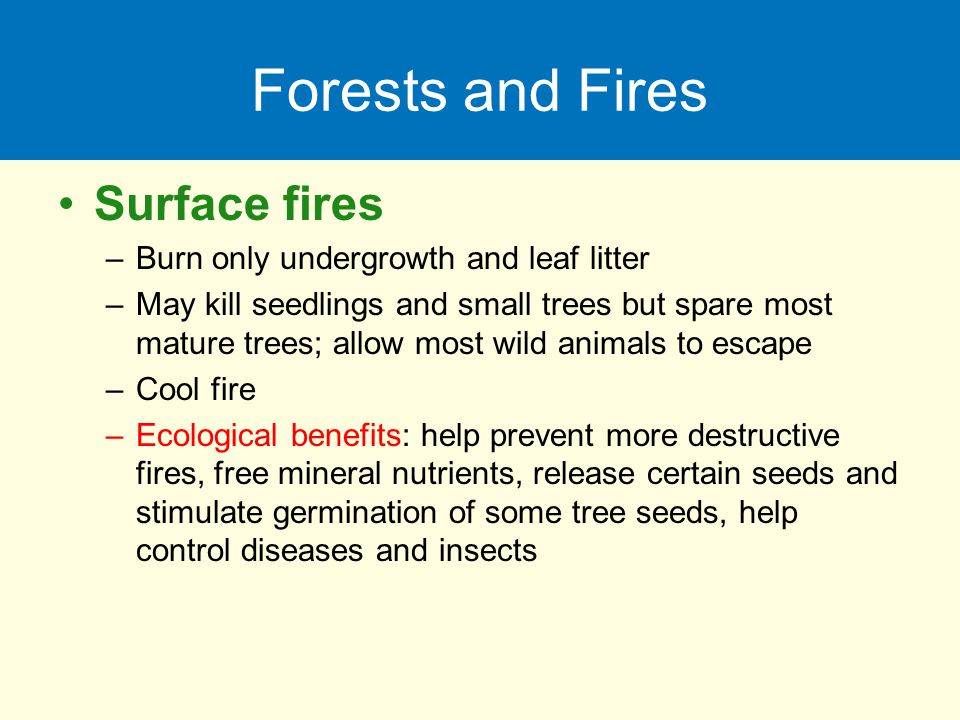 Forests and Fires Surface fires Burn only undergrowth and leaf litter