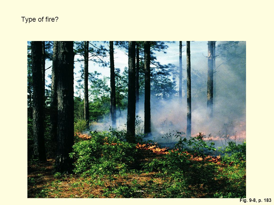 Type of fire. Surface fires usually burn only undergrowth and leaf litter on a forest floor.