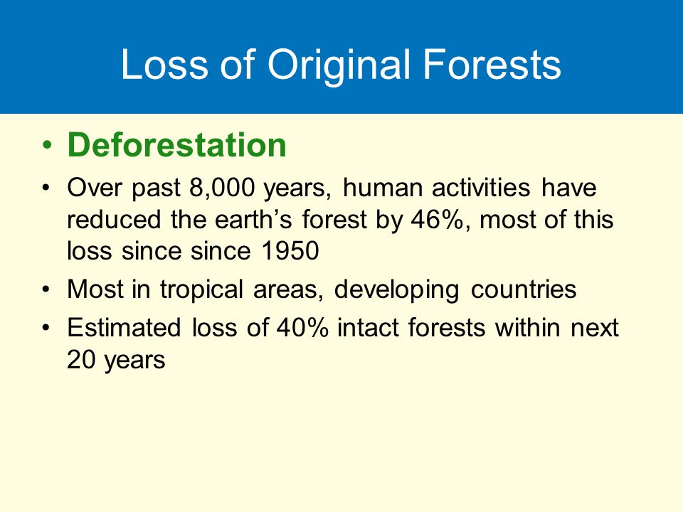 Loss of Original Forests