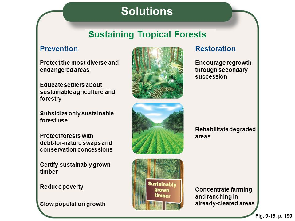 Solutions Sustaining Tropical Forests Prevention Restoration