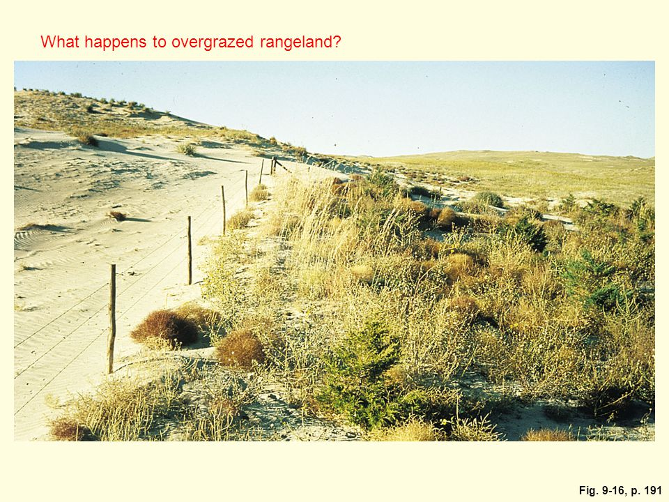 What happens to overgrazed rangeland