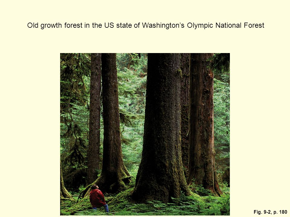 Old growth forest in the US state of Washington's Olympic National Forest
