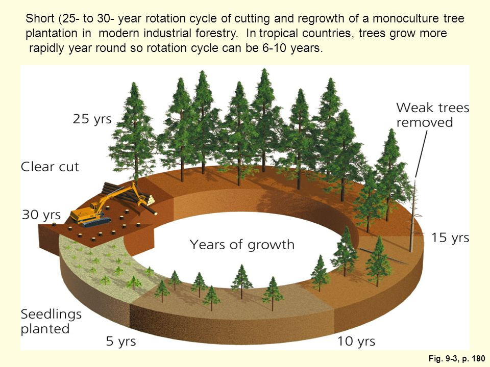 rapidly year round so rotation cycle can be 6-10 years.