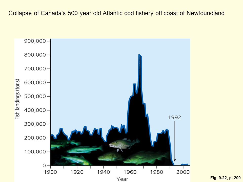 Collapse of Canada's 500 year old Atlantic cod fishery off coast of Newfoundland